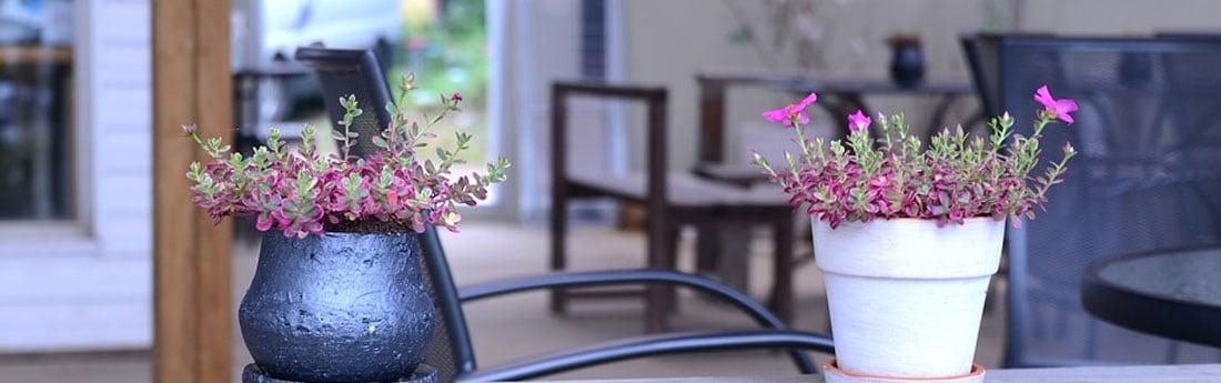Hormigas en primavera