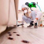 Detectar una plaga de cucarachas