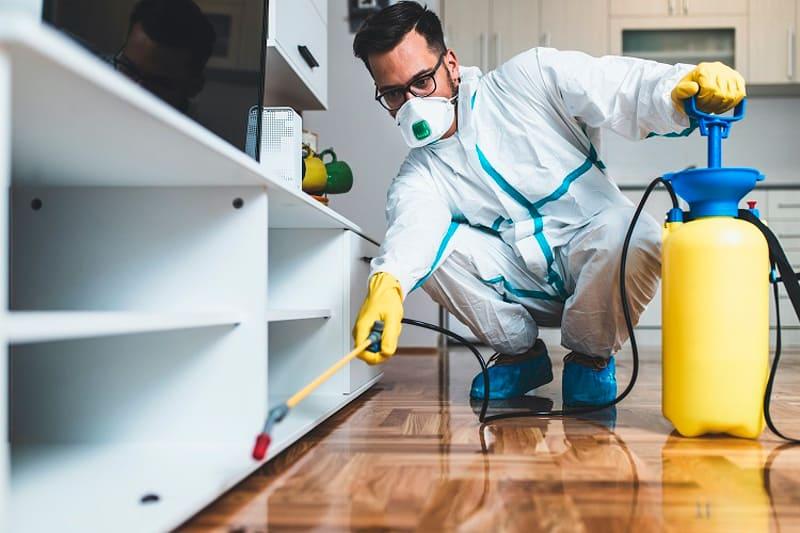 contratar una empresa de control de plagas en Madrid