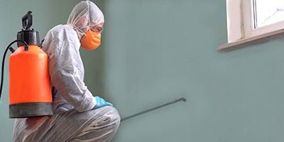 Expertos control de plagas madrid