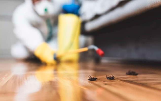 Plagas de Cucarachas
