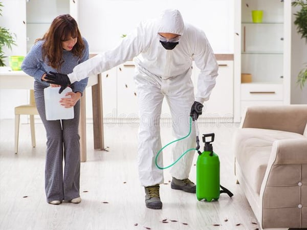 Exterminador de plagas en Madrid Centro