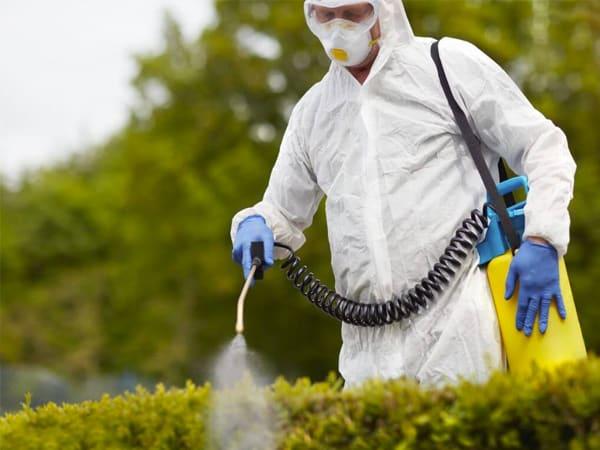 Plaga de avispas en Moncloa