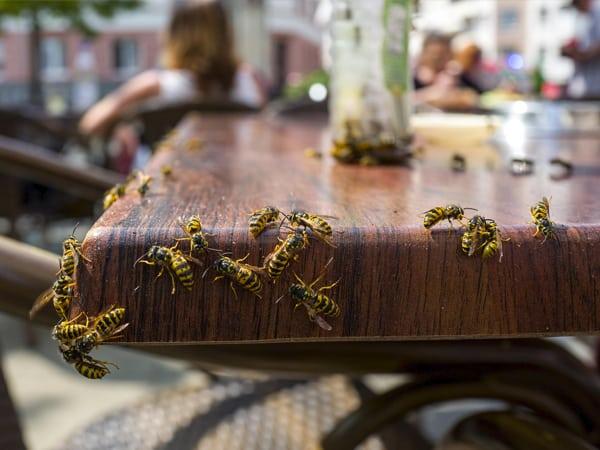 Plaga de avispas en Retiro
