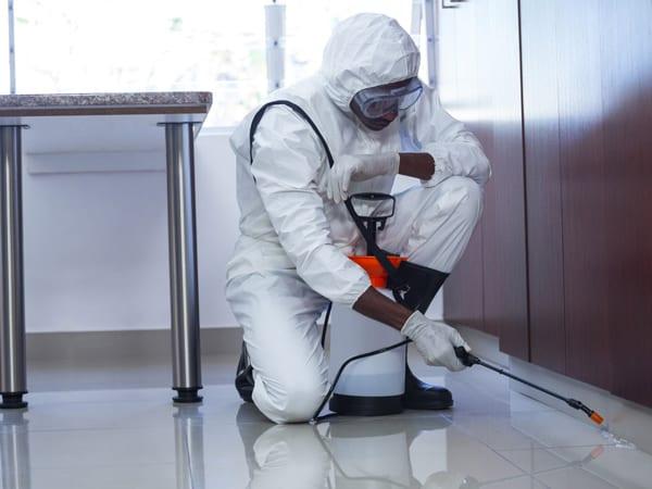 Control de Plaga de garrapatas